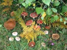 photo de Balade découverte des champignons